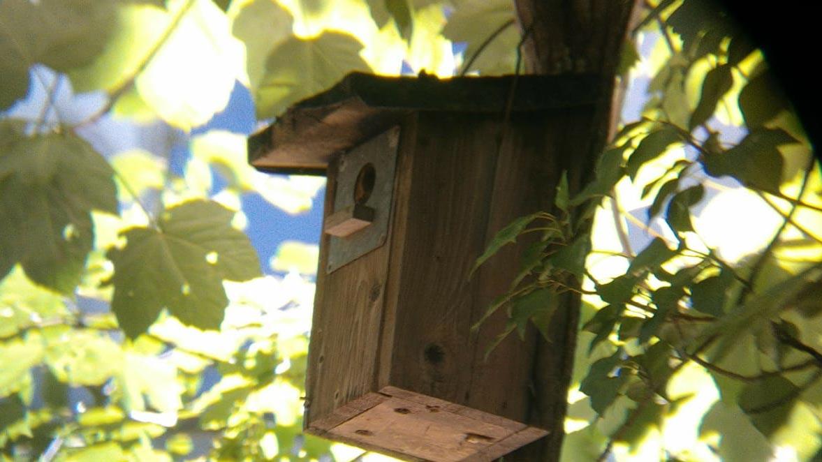 Vogelhaus im Hugenottenhaus, Kunstzone (Eeva)
